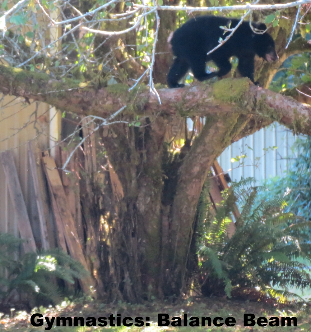 BearGymnastics.JPG