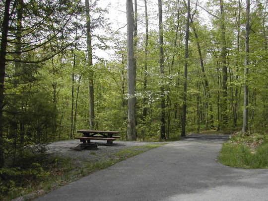 Immerse yourself in nature in Seneca Shadows Campground, WV