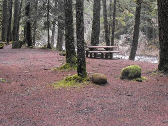 Campsites on Olallie Creek