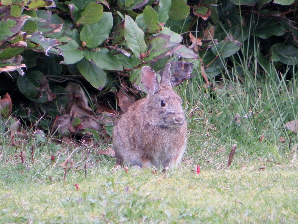 Tillicum Beach Campground - Brush Bunny
