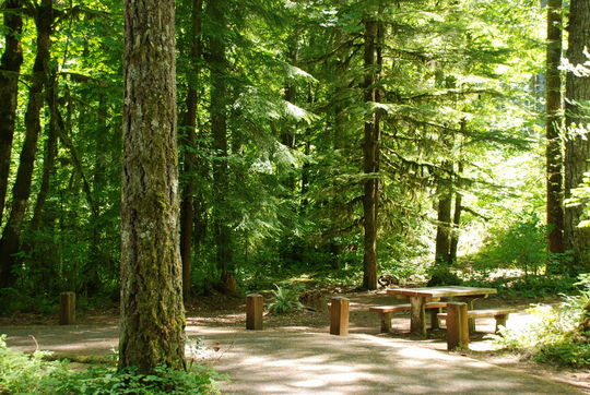 Shady campsites in Hoover Campground, Detroit Lake, OR