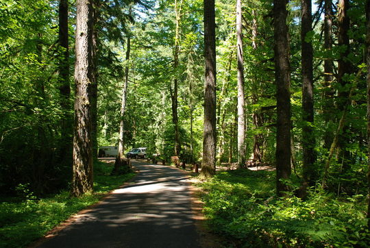 Lush and green forest camping in Hoover Campground, Detroit Lake, OR