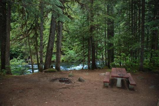 Shady camping