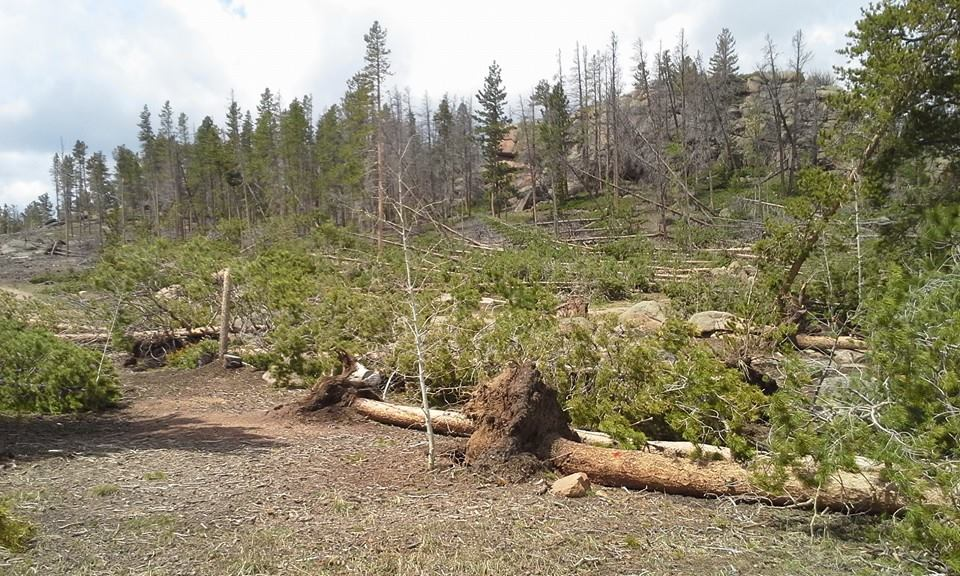 Wind damage to Bellaire Lake Campground, Red Feather Lakes, Colorado - photo by Bob & Kathy Swanson, Area Managers\AL&L