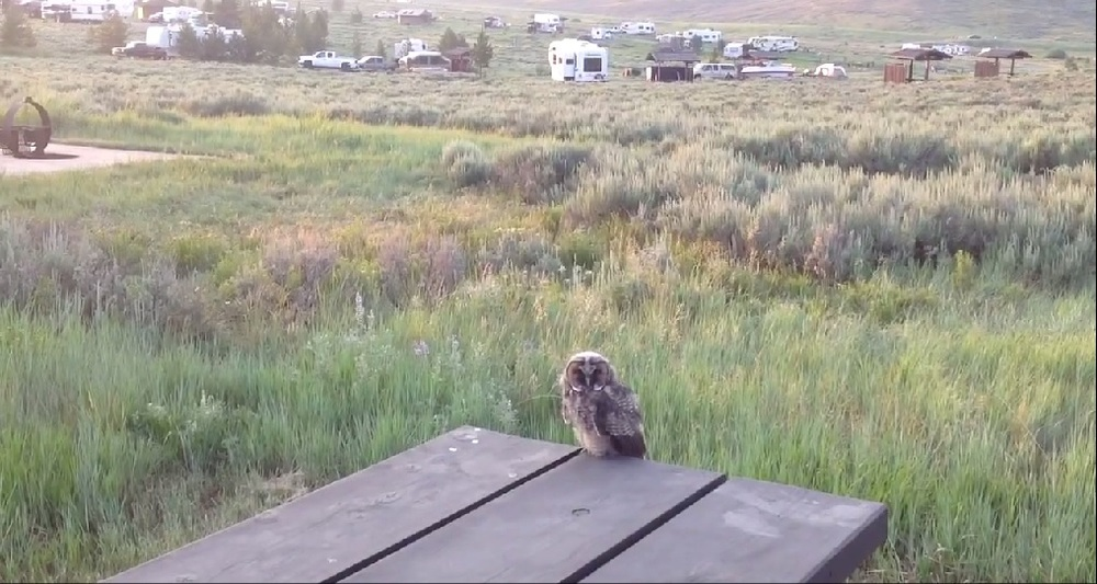 Baby Owl - Strawberry Campground, UT