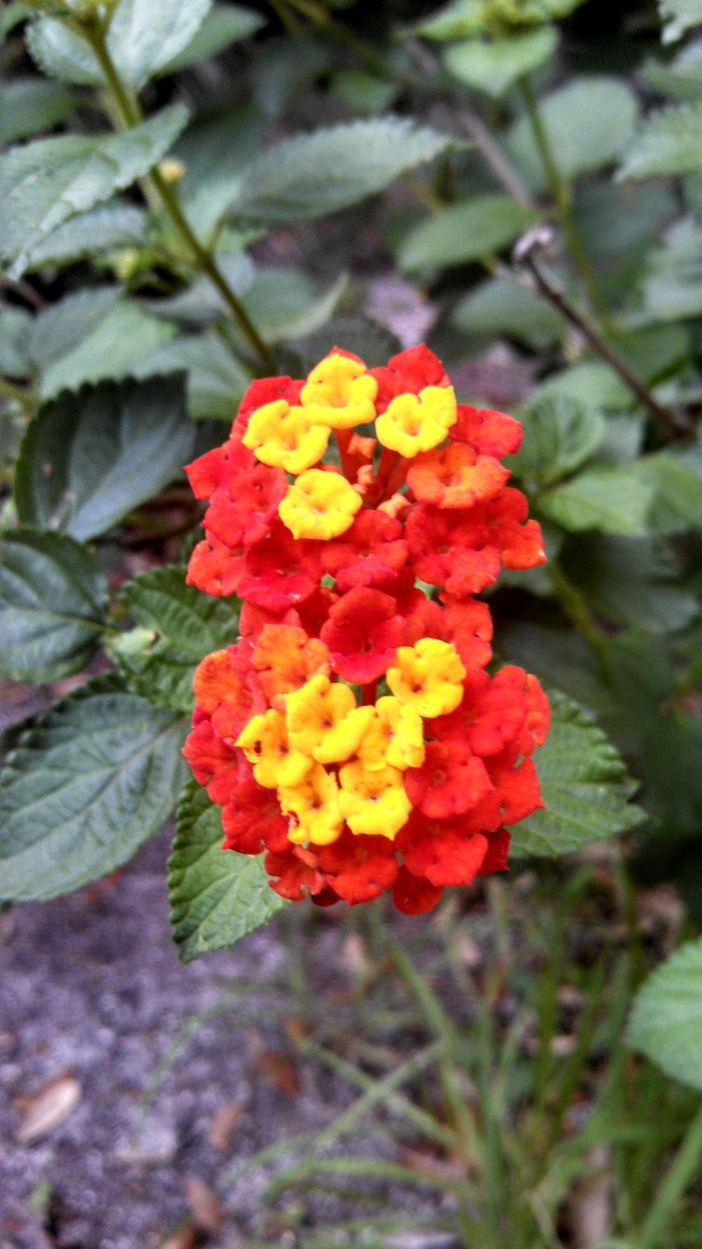 SilverGlenSprings-Flowers.jpg