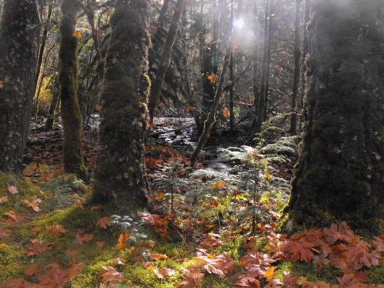 Enjoy the beauty of Oregon