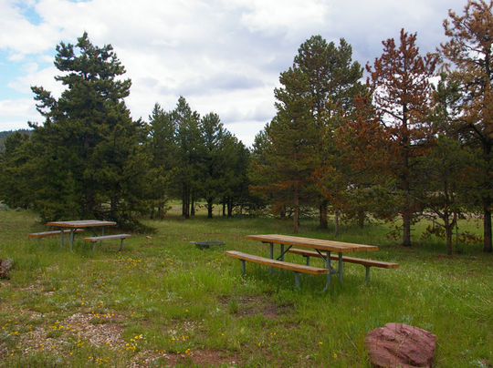 Picnic tables and fire rings in each site