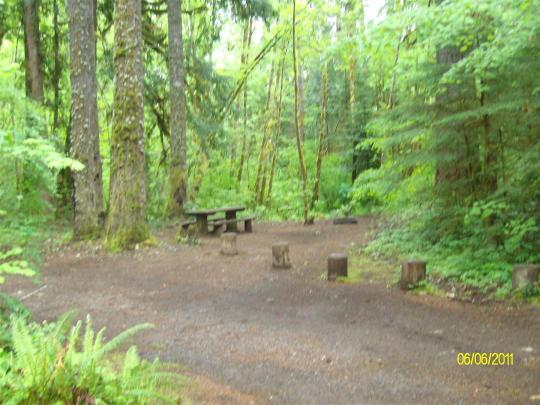 Lushly shaded campsites