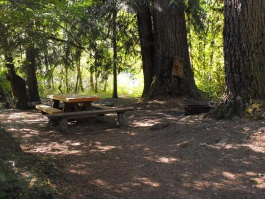 Picnic table and fire ring in each site