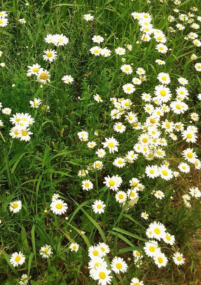 DevilsElbow-wildflower-4.jpg