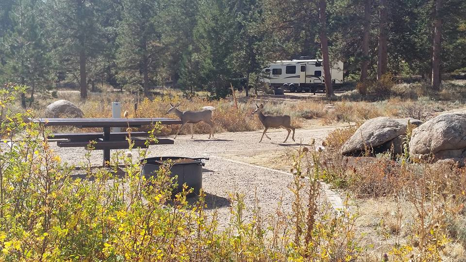 Campground wildlife