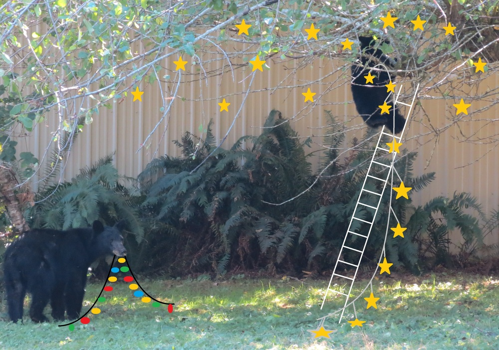 BearsDecoratingForChristmas.jpg