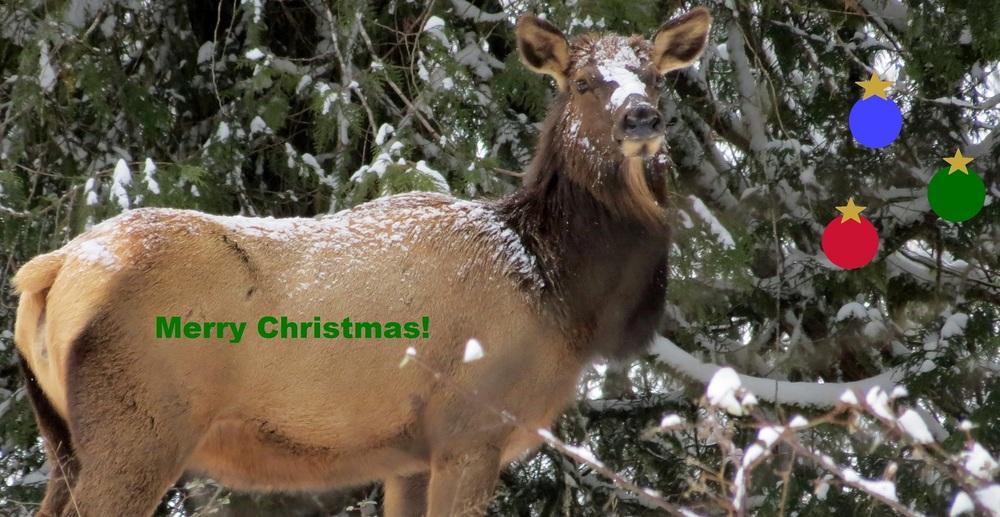 MerryChristmas-Elk.JPG
