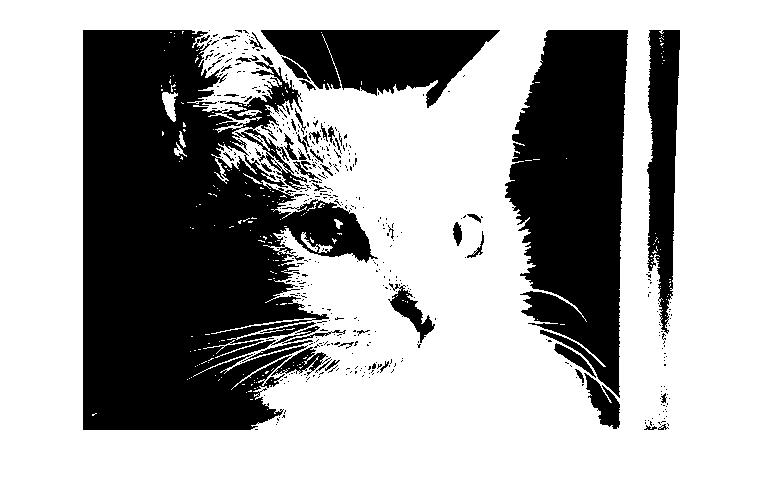 The optimal image for the cat as identified by the program