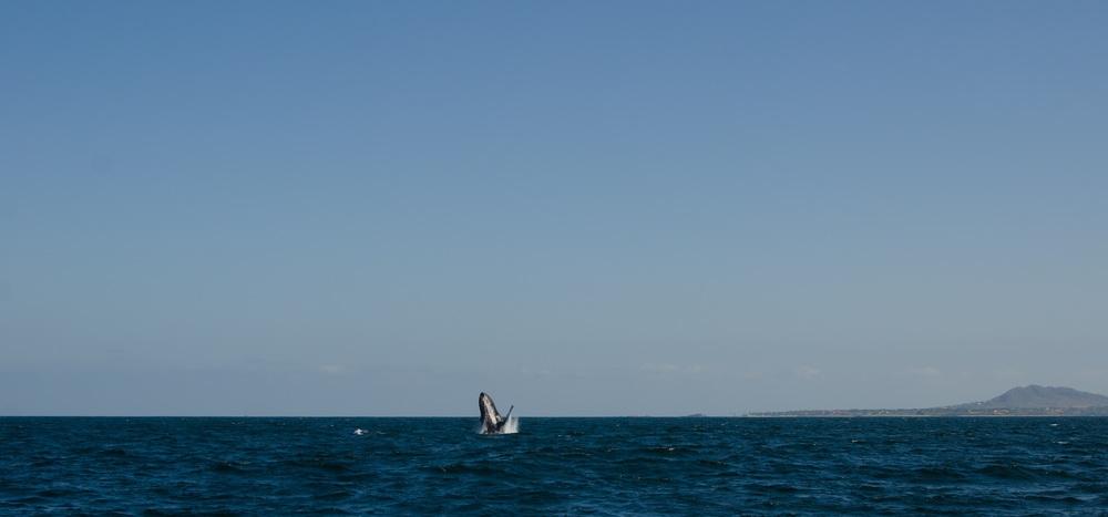Banderas Bay, 2012