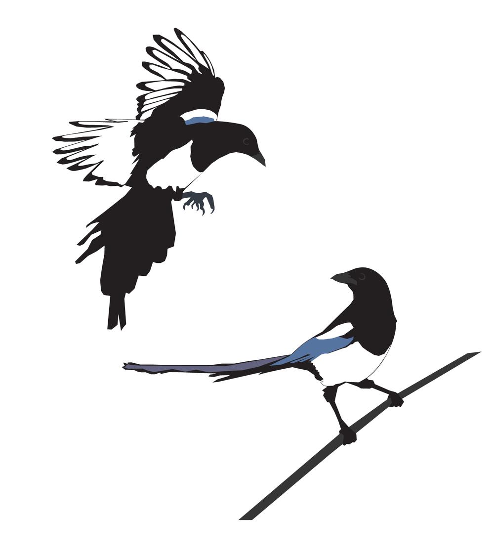 bird3_Magpies.png