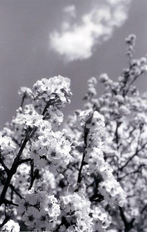 springflower2.jpg