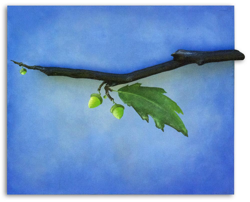 09_blue_acorn_branch.jpg