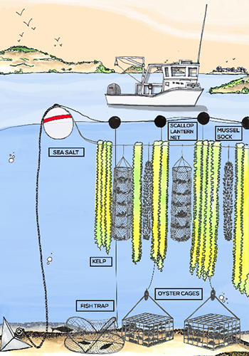 A drawing of Greenwave's 3D Ocean Farming system / Greenwave
