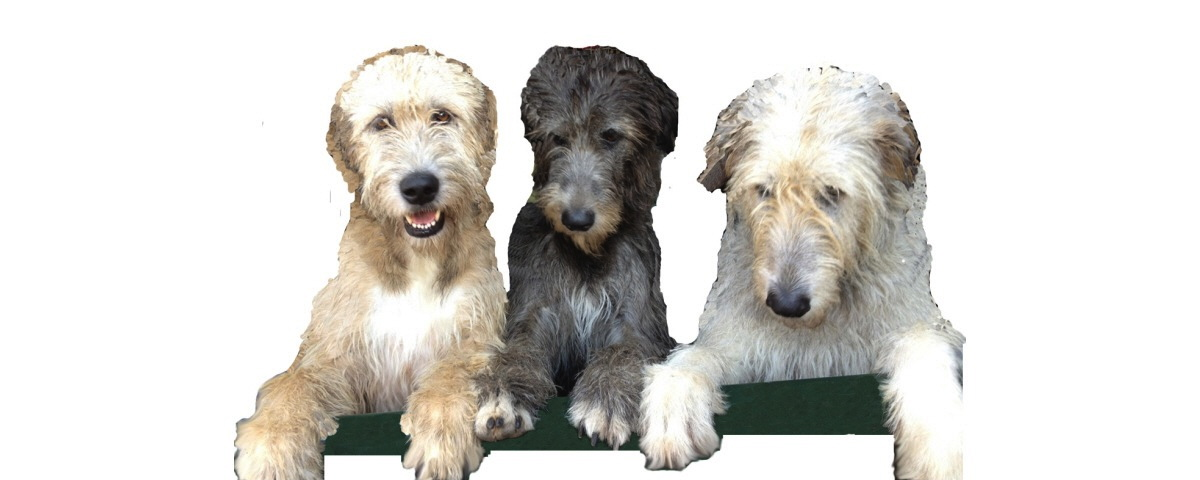 Bonaforte Irish Wolfhounds