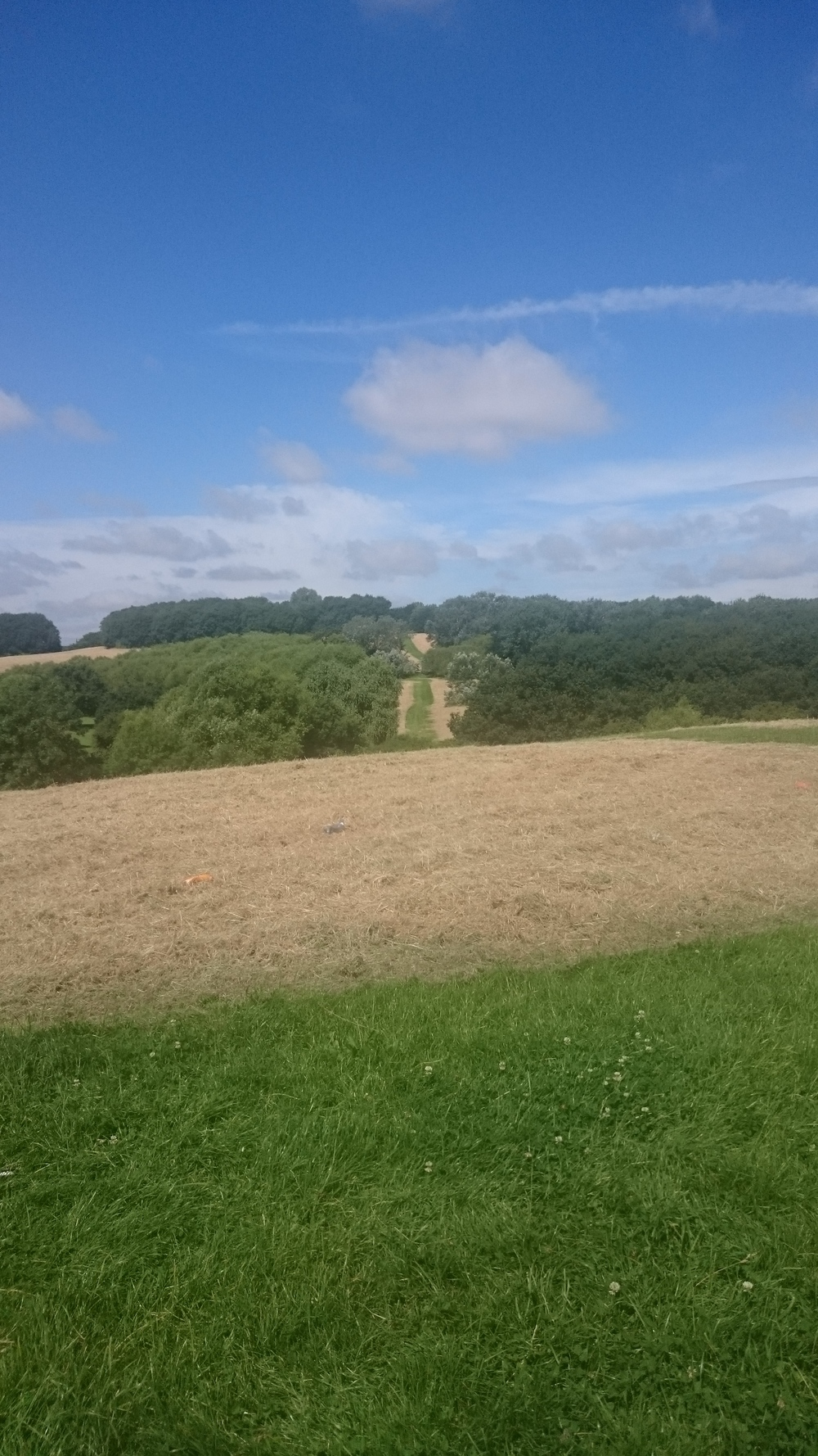Gloucester Park園內山丘。
