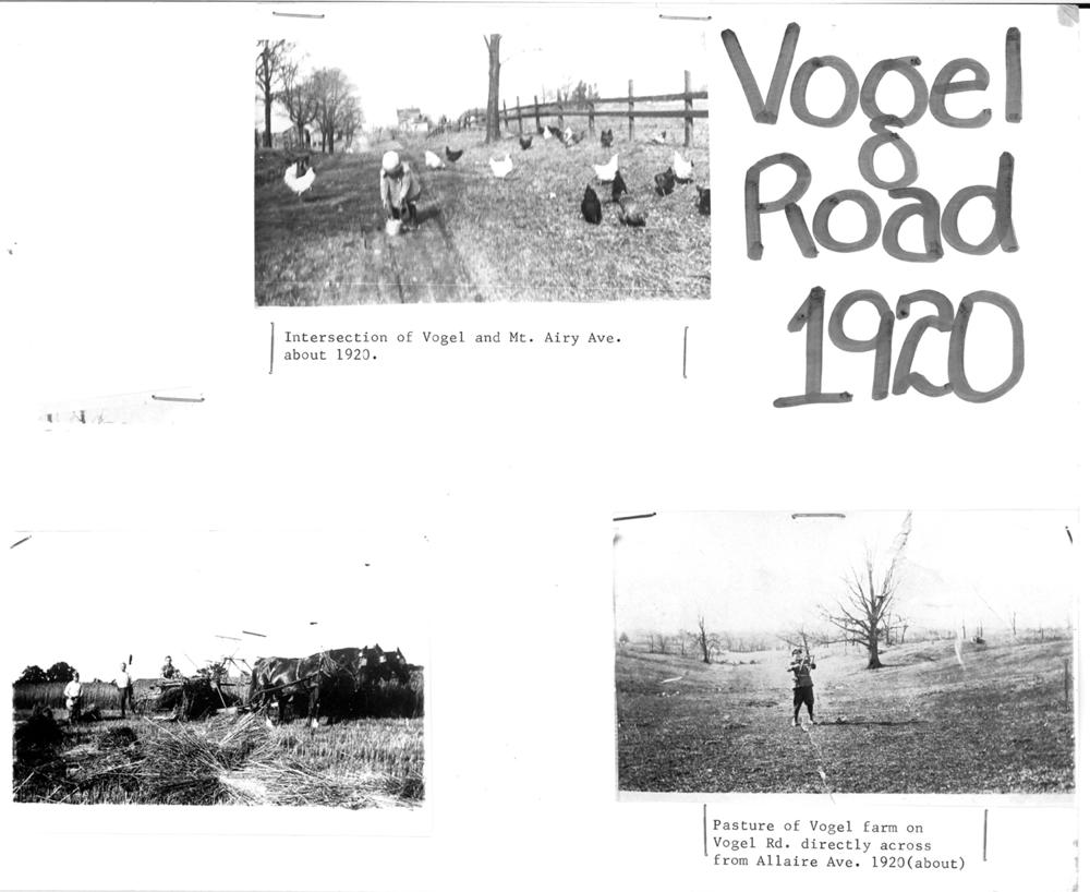 Vogel_1920.jpg