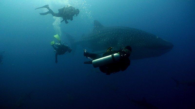 maya-underwater.jpg