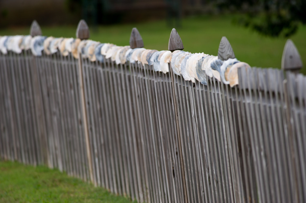 These large beautiful shells were all carefully placed along the fence of this quaint shore house.