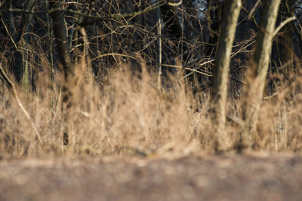 Can you find the deer hidden in this photo (try clicking for a larger version).  A perfect example of camouflage.