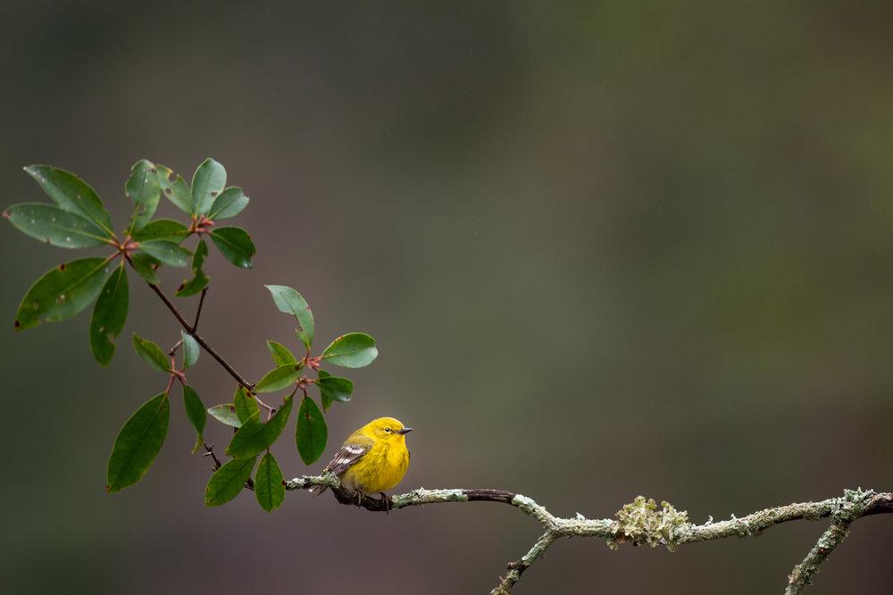 04_Spot of Yellow.jpg