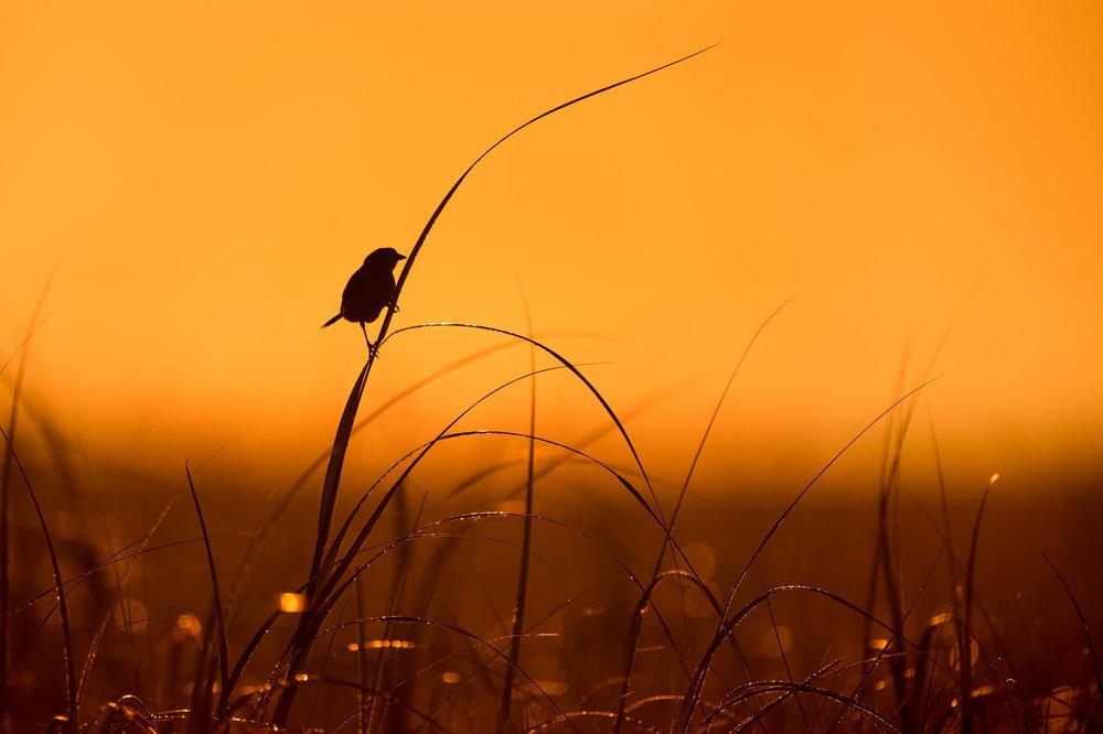 04_Sparrow Silhouette.jpg