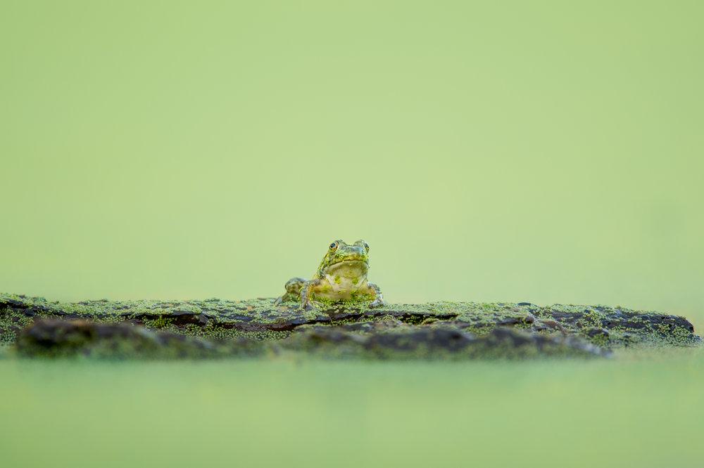 02_Log Frog.jpg