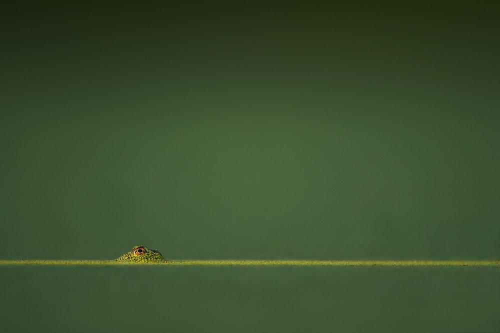 04_Frog Sunlight Streak.jpg