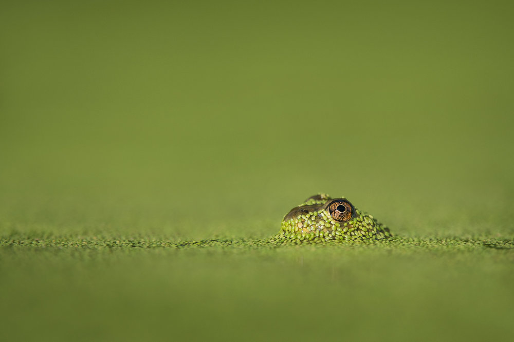 03_Through the Duckweed.jpg