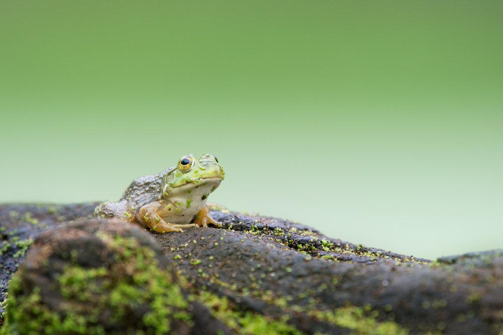 06_Frog on a Log.jpg