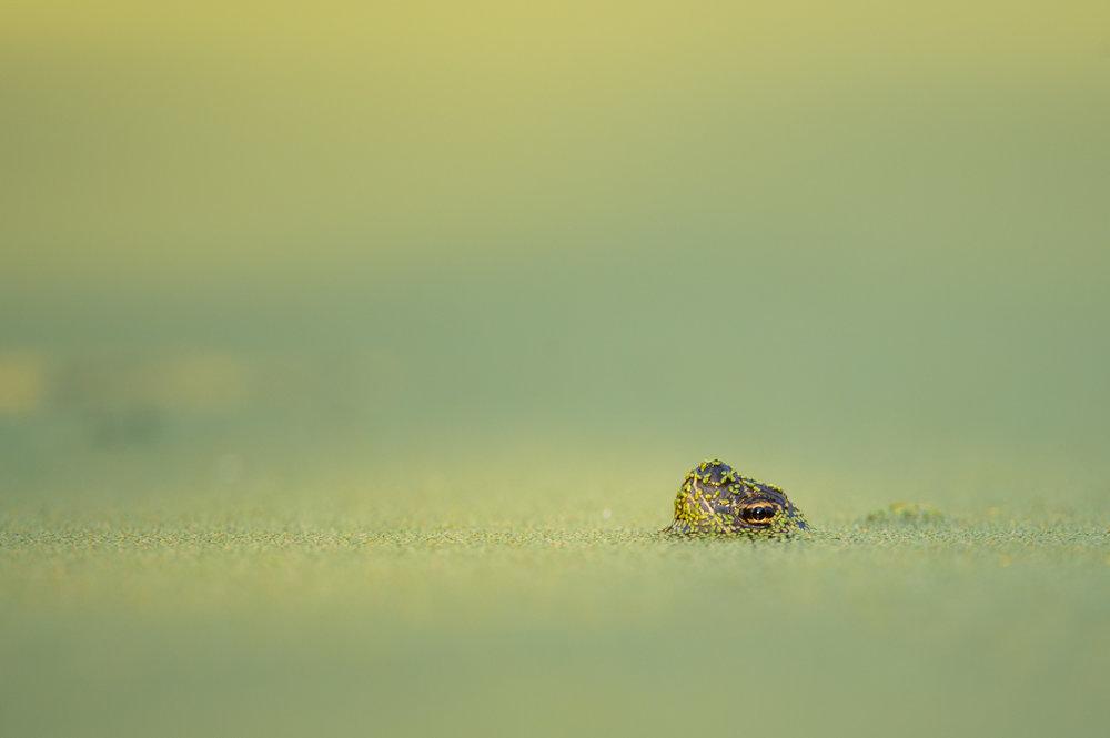 07_Turtle Head.jpg