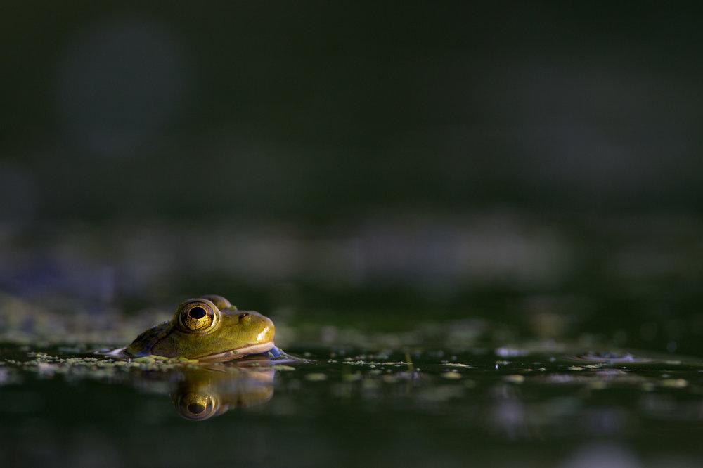 09_Sunlit Frog.jpg