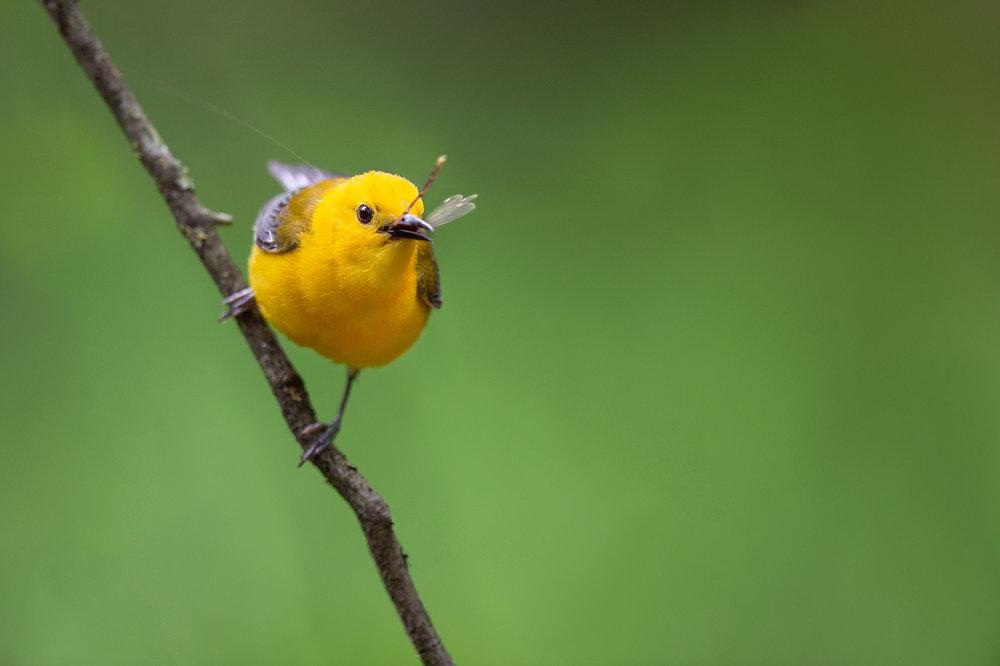 13_Is There Something on My Beak?.jpg