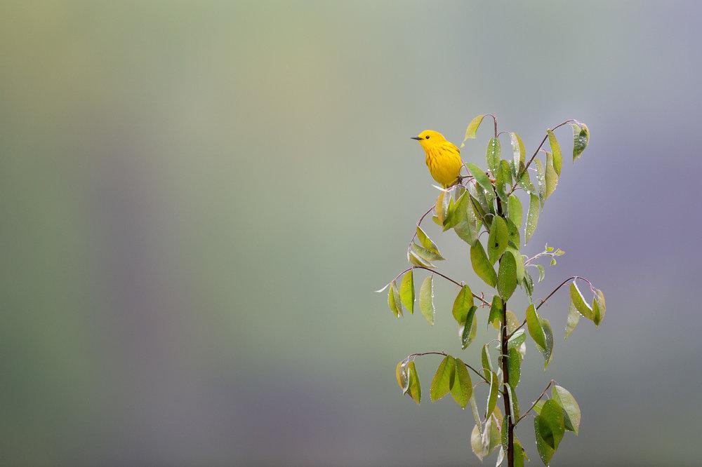44_Yellow Tree Topper.jpg