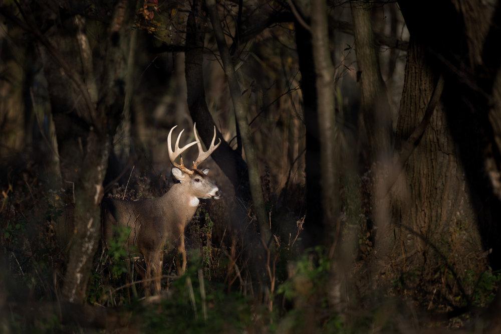 08_Buck in the Spotlight.jpg