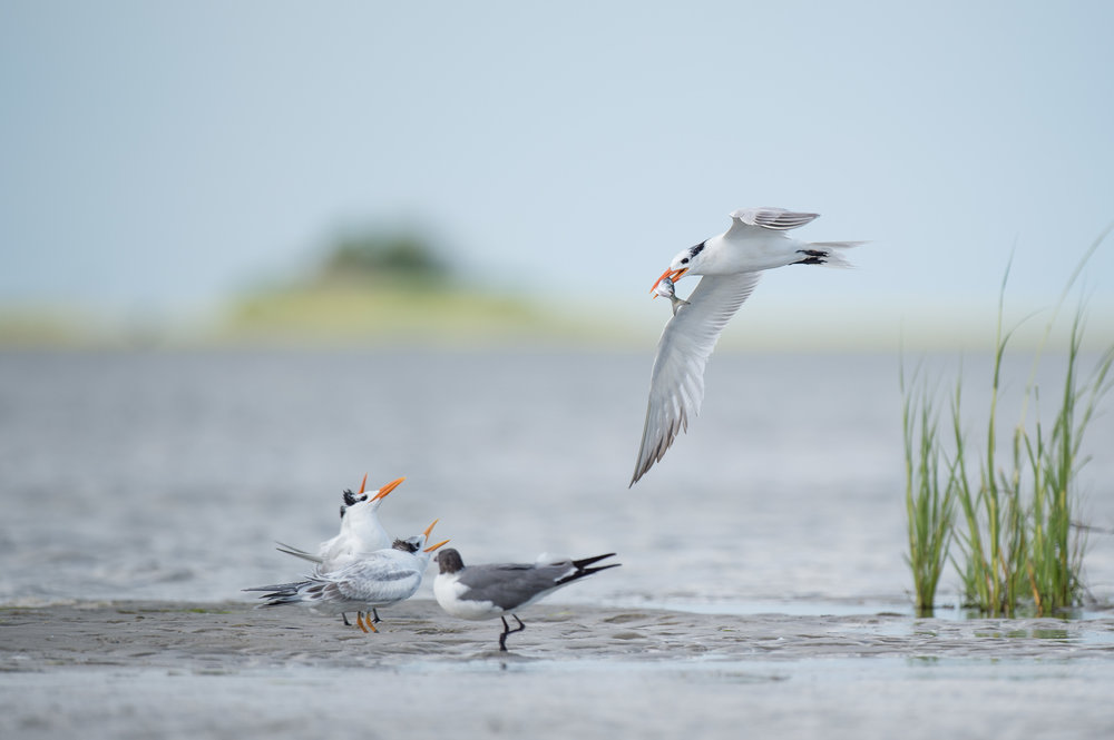002_jersey_shorebirds.jpg