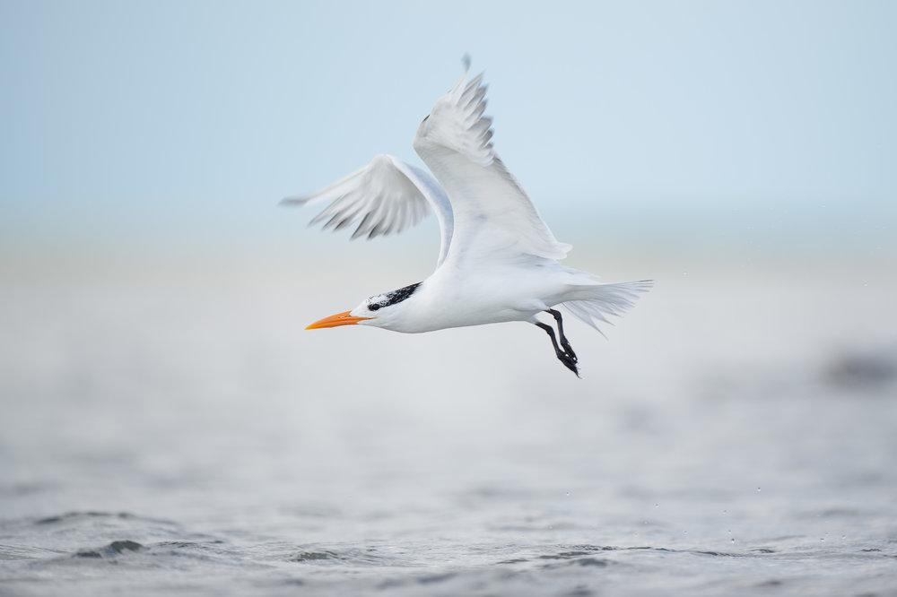 003_jersey_shorebirds.jpg