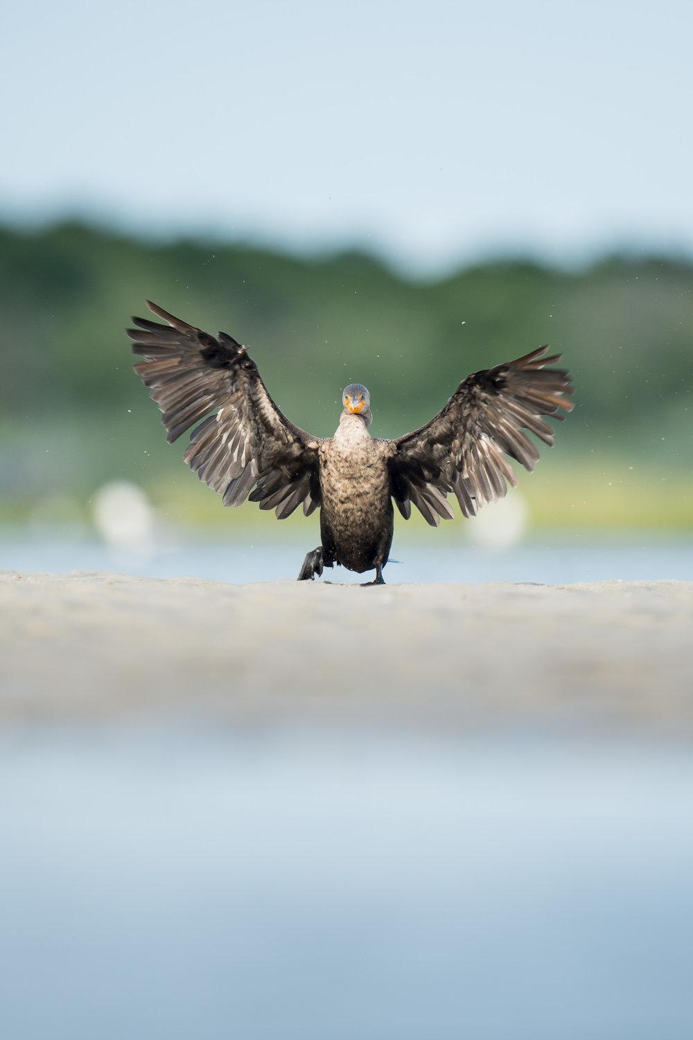 015_jersey_shorebirds.jpg