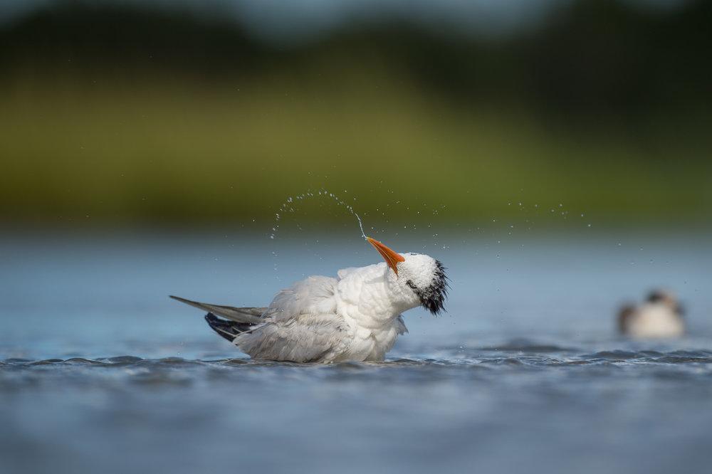 016_jersey_shorebirds.jpg