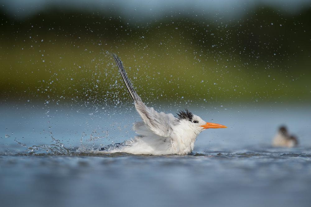 017_jersey_shorebirds.jpg