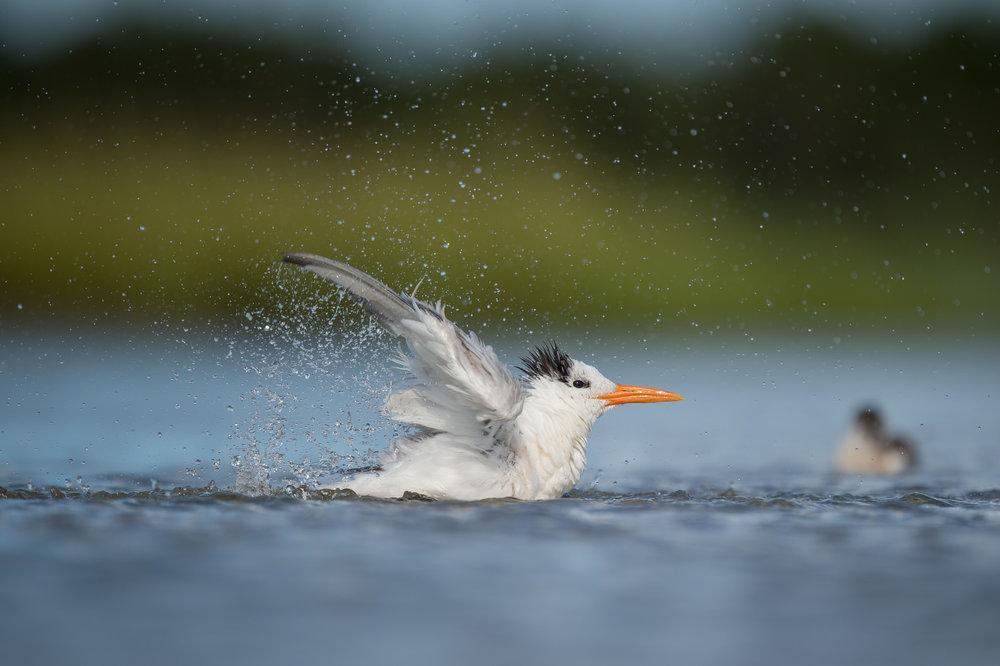 018_jersey_shorebirds.jpg