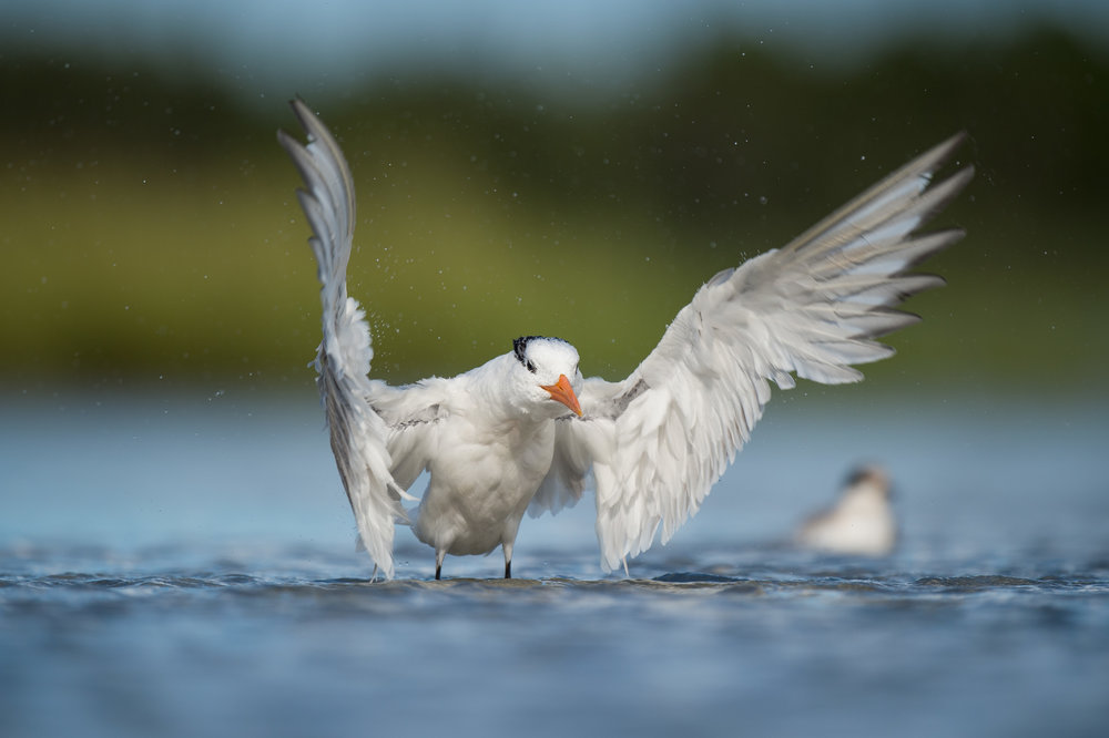 020_jersey_shorebirds.jpg