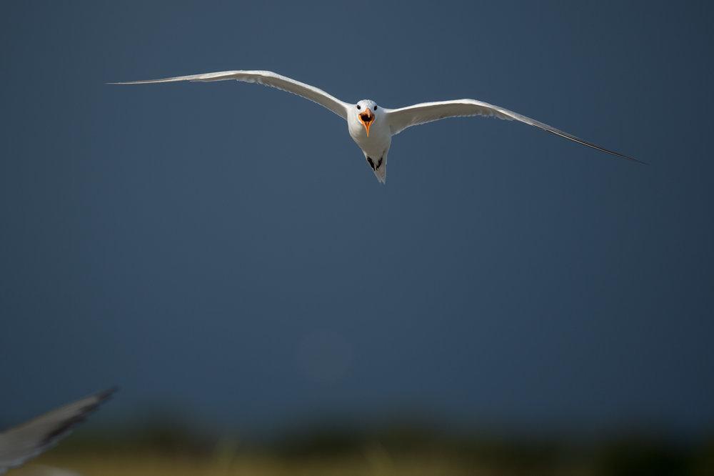 022_jersey_shorebirds.jpg