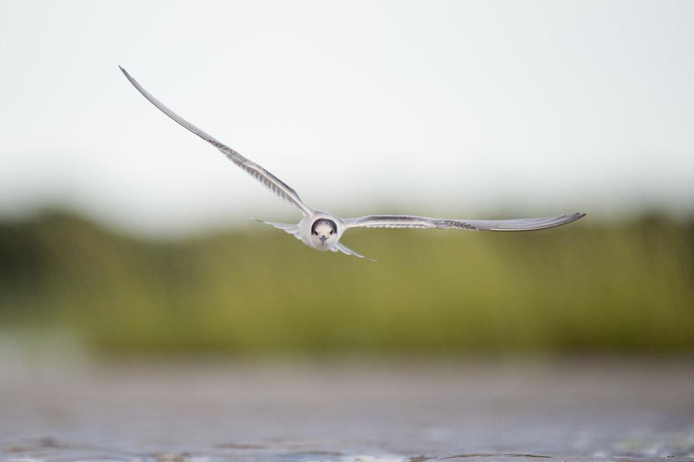 025_jersey_shorebirds.jpg